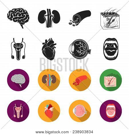 Male System, Heart, Eyeball, Oral Cavity. Organs Set Collection Icons In Black, Flet Style Vector Sy