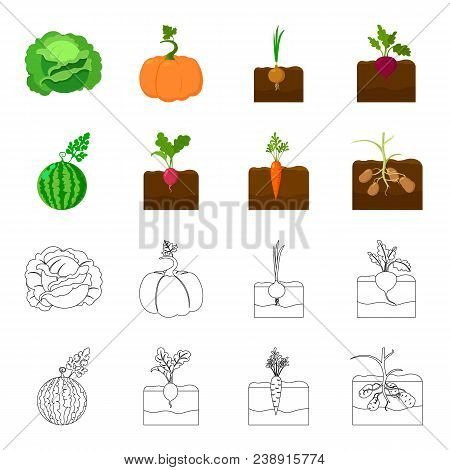 Watermelon, Radish, Carrots, Potatoes. Plant Set Collection Icons In Cartoon, Outline Style Vector S