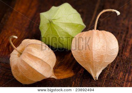 Physalis Fruits Closeup