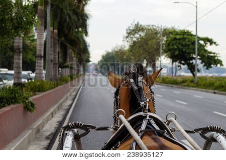 Brown Horse In Coach Harness On Empty Street Of Seaside City. Vintage Coach With Horse. Cute Horse I
