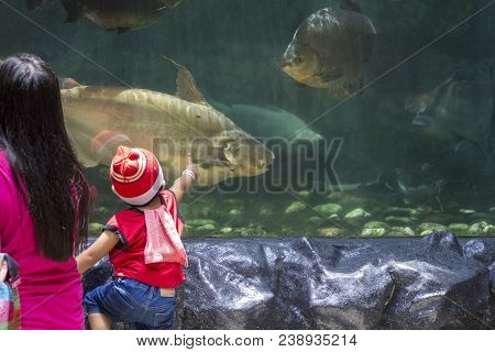 Manila, The Philippines - 19 April 2018 - Mom And Son In Ocean Park Aquarium Looking At Fishes. Litt
