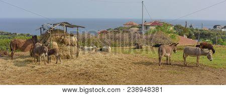 Donkeys Grazing On A Farm On A Sunny Day