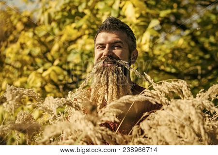 Spikelet Beard At Barber And Hairdresser. Hipster Or Bearded Guy In Autumn Nature Outdoor. Season An