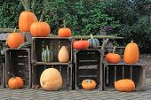 Pumpkin and gourd outdoor display