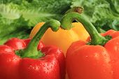 Three colorful Bell Peppers on a bed of green Romain Lettuce Leaves. poster