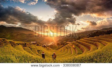 Green Rice Fields On Terraced In Muchangchai, Vietnam Rice Fields Prepare The Harvest At Northwest V