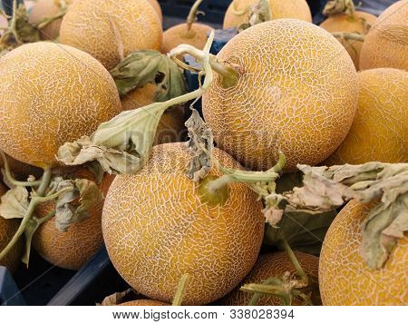 Fresh Melons With Sprouts On The Market