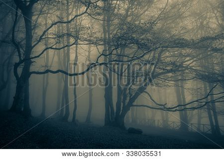 Dark Scary Horror Forest Scene In The Park Of Mount Cucco, Umbria, Italy