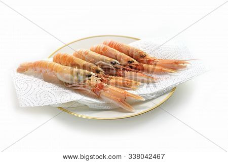Several Fresh Scampi Also Called Norway Lobster Or Langoustine Ready For Preparation, Expensive Seaf