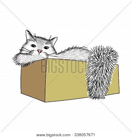 A Big Shaggy Cat Is Sitting In A Cardboard Box. The Cat Looks At Us With Cunning Yellow Eyes. He Has