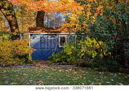 Blue She-shed In The Garden With Colourful Autumn Leaves