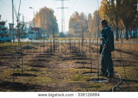 Gardener Watering Young Trees In Summer Garden