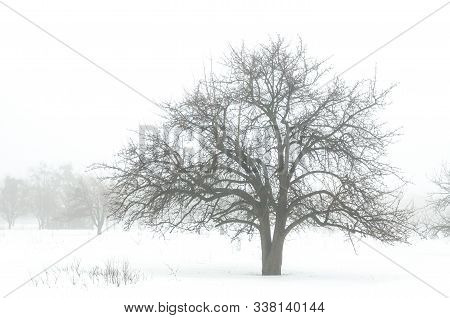 Winter Landscape Isolated On A White Background