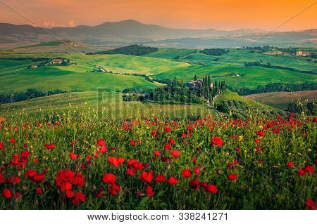 Picturesque Grain Meadows And Blooming Red Poppies At Sunset, Near Pienza, Tuscany, Italy. Spring La