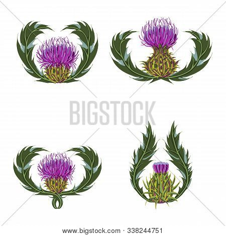 Set Of Purple Flowers, Buds, Spiny Stems, Green Leaves On White Background.