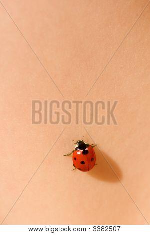 Ladybug On Skin