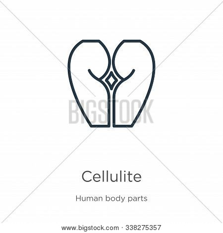 Cellulite Icon. Thin Linear Cellulite Outline Icon Isolated On White Background From Human Body Part