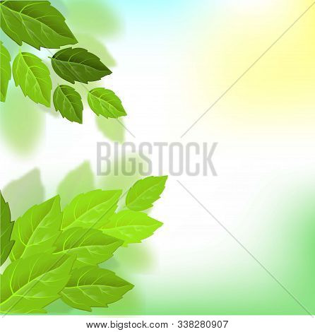 Vector Exotic Summer Background. Leaf Texture Pattern Background. Eco Design Vector Illustration. Fo