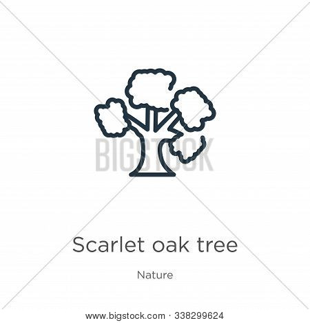 Scarlet Oak Tree Icon. Thin Linear Scarlet Oak Tree Outline Icon Isolated On White Background From N