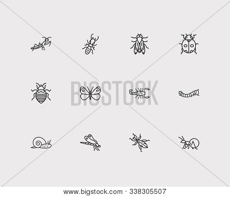 Insect Icons Set. Termite And Insect Icons With Cabbage Butterfly, Bedbug And Fat Tailed Scorpion. S