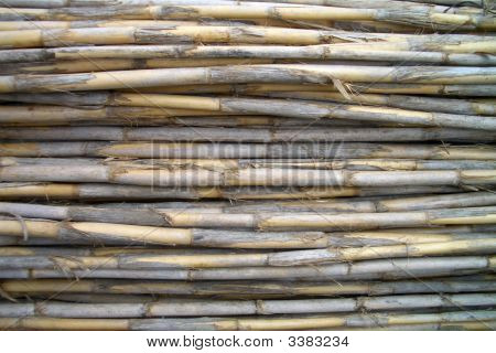 Set Of Horizontal Dried Canes
