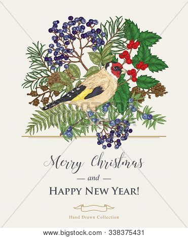 Christmas Card With A Bird And Winter Plants. Hand Drawn Finch, Holly Branch, Juniper, Pine And Elde