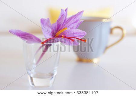 Crocus Sativus, Commonly Known As Saffron Crocus, Or Autumn Crocus.the Crimson Stigmas Called Thread