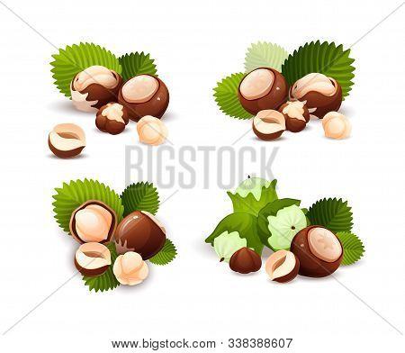 Hazel Nut Compositions Set, Food Vector Isolated