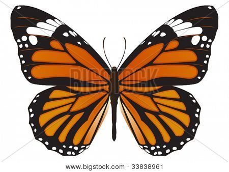 The Monarch butterfly (Danaus plexippus) vector