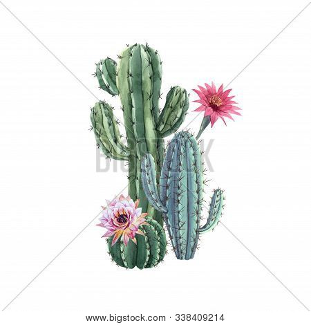 Beautiful Watercolor Cactus Combination. Hand Drawn Stock Illustrations. White Background. Isolated