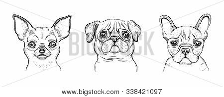 Dogs, Cute Line Set. Chihuahua, Pug, Bulldog Engraved Design Collection. Cool Animal Vector In Doodl