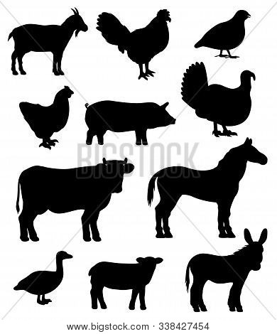 Farm Animals And Poultry Birds Isolated Silhouettes. Vector Cattle Icons, Goat And Cow, Sheep And Ho