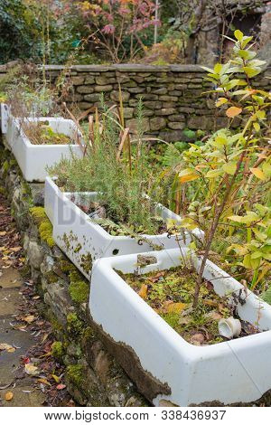 A Novel Use For Old Butler Sinks As Quaint Plant Pots With A Difference!
