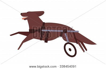 Disabled dog flat vector illustration. Pet with spinal wheelchair. Invalid puppy active lifestyle concept. Running hound with hind leg injury, pooch with dog wheelchair isolated on white background. poster