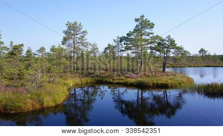 Nature Protected Area With Wild Bog In Estonia During Summer