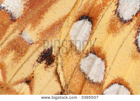 Extreme Closeup Of Great Spangled Fritillary Butterfly Wing