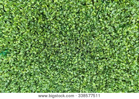 Green Leaves Carpet Background Pattern. Spring Green Foliage Young Leaves White Texture Eco Backgrou