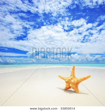 A view of a starfish on a beach, cloudy sky and turquoise sea at Kuredu island, Maldives, Lhaviyani atoll
