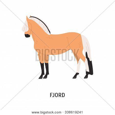 Fjord Breed Horse Flat Vector Illustration. Pedigree Equine, Norwegian Hoss. Equestrian Sport, Horse