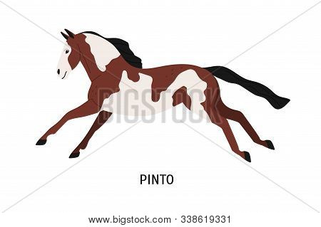 Pinto Breed Horse Flat Vector Illustration. Pedigree Equine, Piebald, Spotty Hoss. Horse Breeding, H