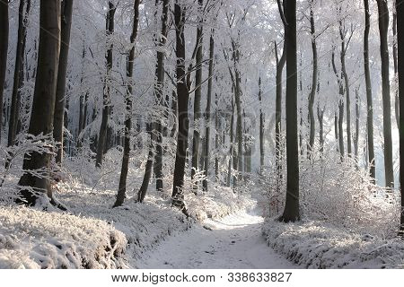 Forest path in winter scenery December Nature background Winter Forest Nature background Forest road lane snow sun Nature background Forest trees sunshine Nature background Winter path road Nature background Natural environment Nature background.