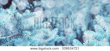 Christmas winter snowy background, blue winter pine tree branches under winter falling snow, closeup of Christmas winter forest nature with free space for Christmas text. Christmas winter panorama. Winter forest landscape