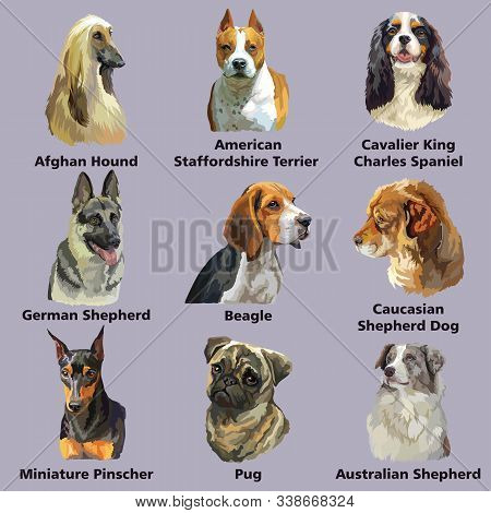 Set Of Dog Breeds Portraits:german Shepherd,beagle, German Pinscher, Afghan Hound, Isolated On Purpl