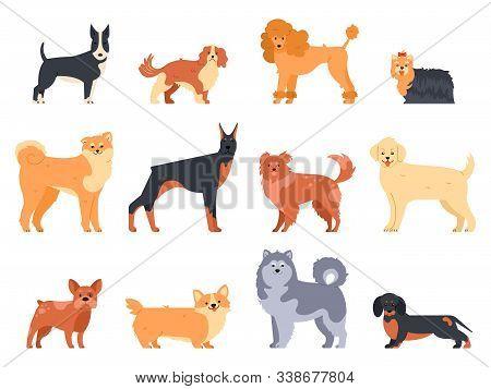 Breeds Of Dogs. Doberman Dog, Alaskan Malamute, Cute Bulldog And Akita. Group Of Purebred Pedigree D