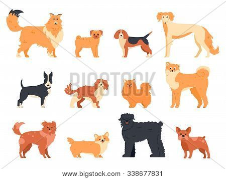 Dogs Breed Character. Purebred Dog Pedigree, Cute Puppy Pug, Beagle, Welsh Corgi And Bull Terrier, F