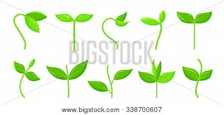 Green Plant, Grass, Sprout Flat Cartoon Icons Set. Organic Young Seedling, Growing Sapling Nature Sy