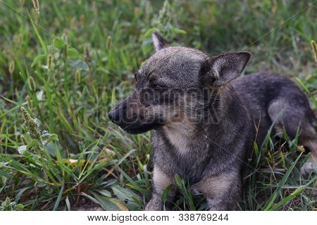 Cute Dog Looking At Owner Asking For Food, Friendly Puppy Lying In The Grass, Animal Adoption Concep