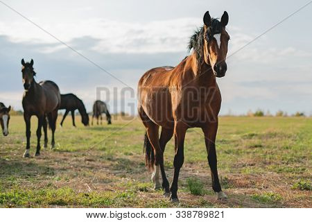 A Happy Brown Horse Standing In The Field On Summer Day