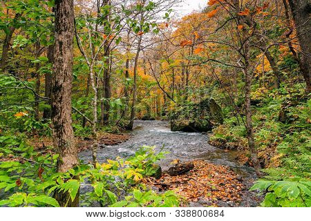 View Of Oirase River Flow Passing Rocks In The Colorful Foliage Of Autumn Forest At Oirase Valley In