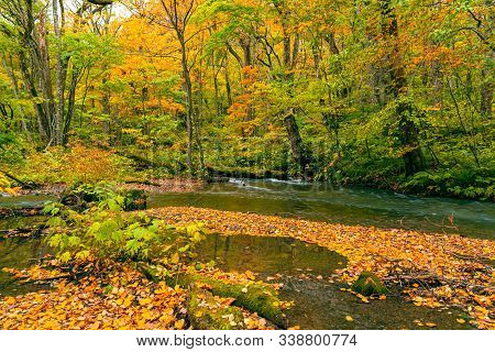 Colorful Falling Leaves Covered The Ground In The Forest Of Autumn Season That The Oirase Mountain S